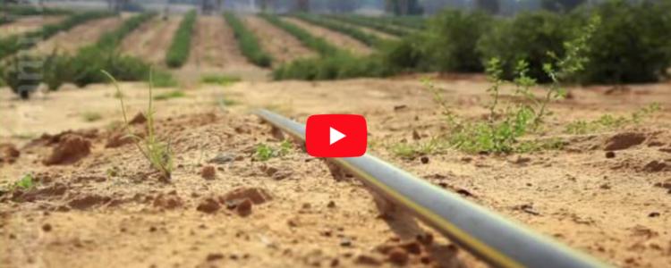 Фильм о воде в израильской пустыне